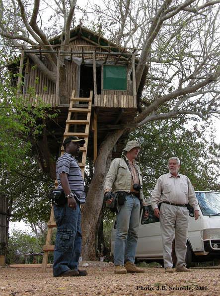 Dr. Campbell Bridges tree house